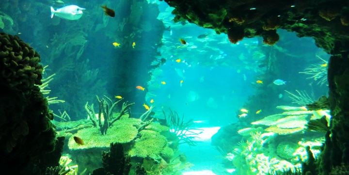 Lizbona_oceanarium