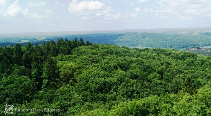 Widok na las bukowy