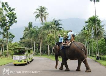 Niestety w Indonezji, podobnie jak w Tajlandii, jazda na słoniu jest popularnym procederem, w którym nikt nie widzi nic złego....