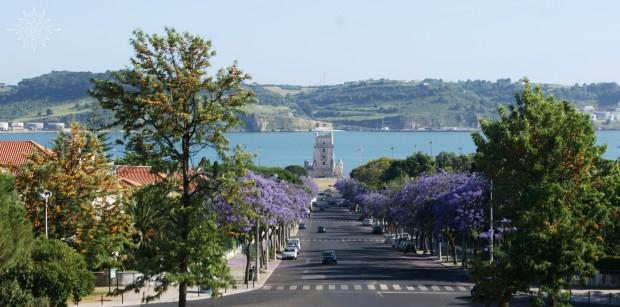 Lizbona_jakarandy